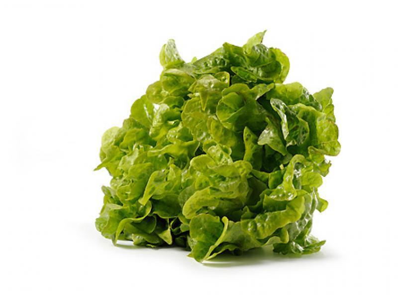 Salat Eichblatt Grün Obst Und Gemüse Kräling